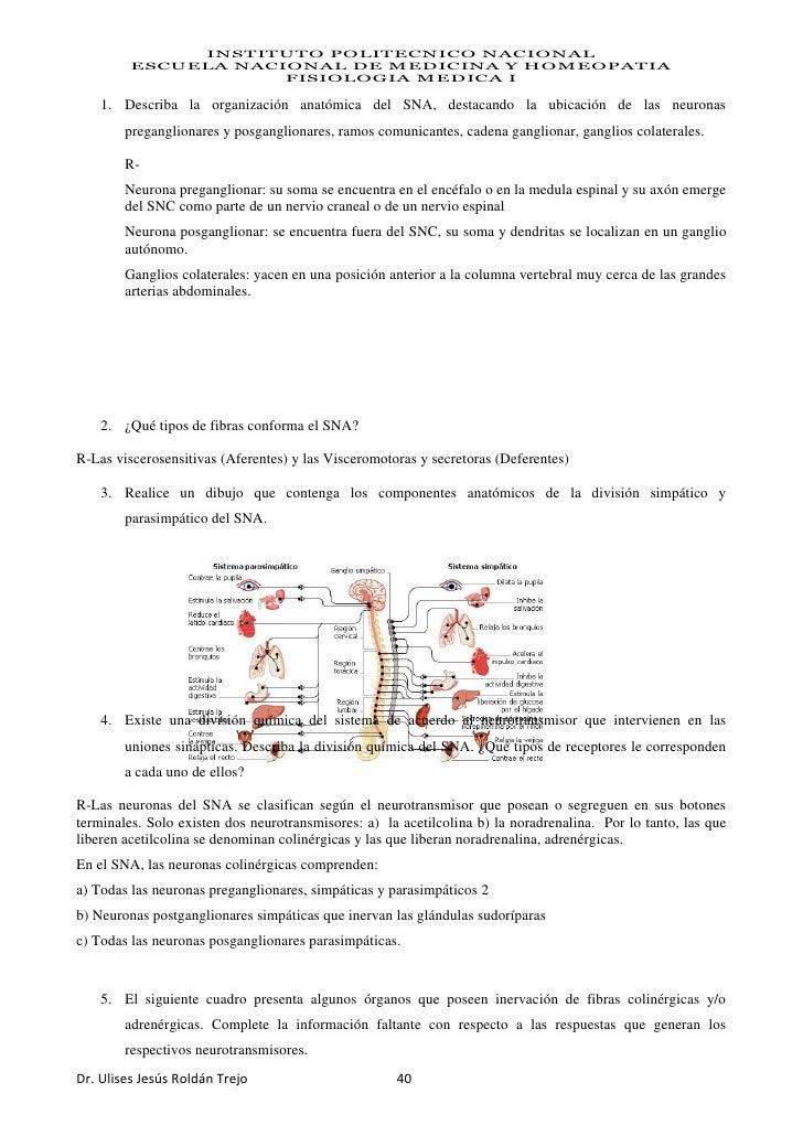 Perfecto Opinión De Hoja 13 De La Neurona Anatomía Y Fisiología ...