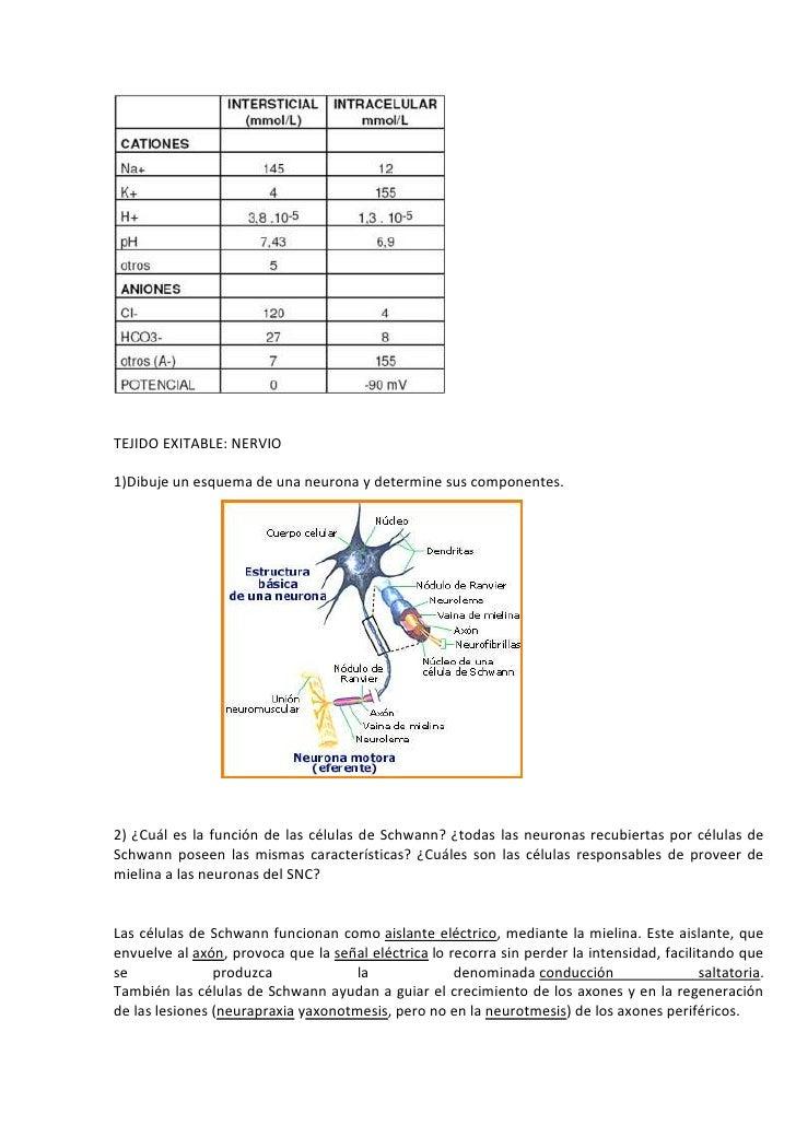 Contemporáneo Anatomía Y Fisiología De Esquema Adorno - Imágenes de ...