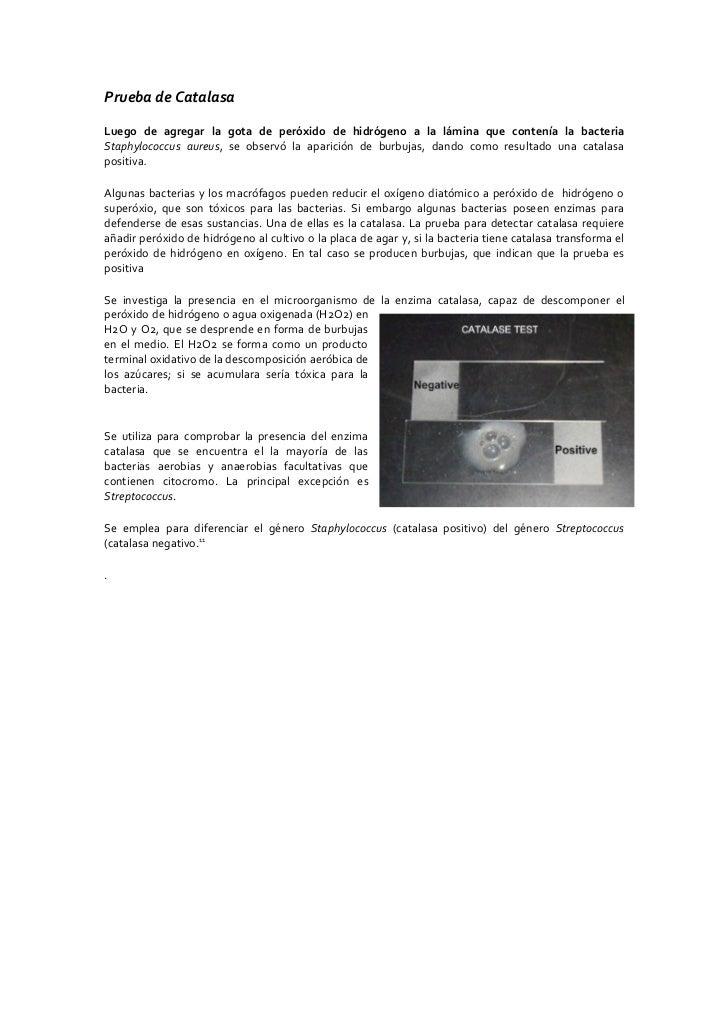 Prueba de Catalasa  Luego de agregar la gota de peróxido de hidrógeno a la lámina que contenía la bacteria Staphylococcus ...