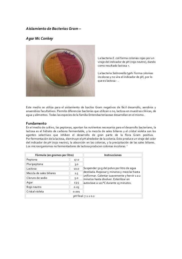 Guía III: Identificación de Enterobacterias Slide 2