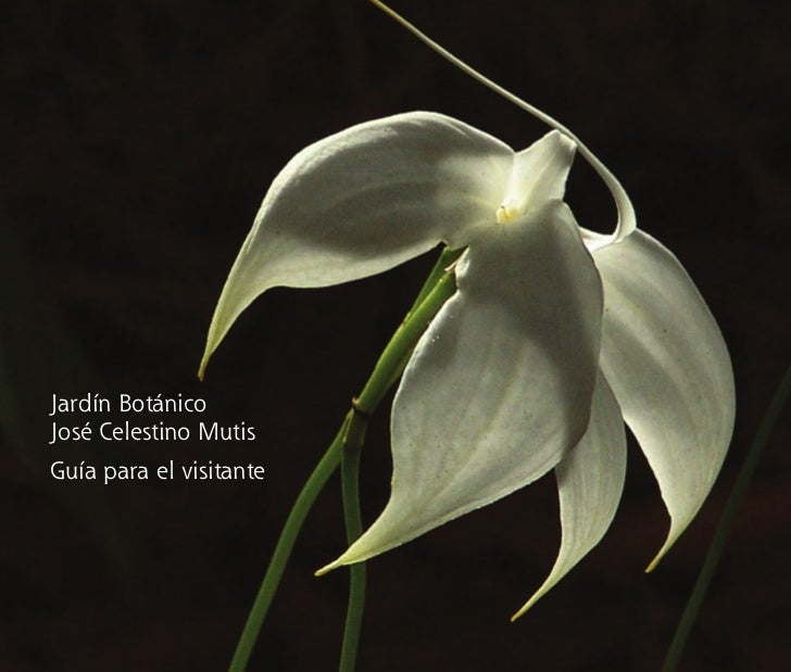 Jardín Botánico         José Celestino Mutis         Guía para el visitanteproyecto completo abril 16.indd 1   09/05/2008 ...