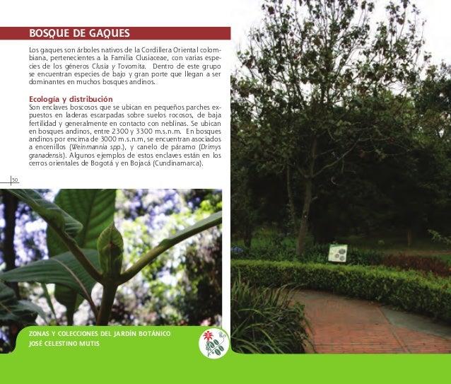 Guia jardin botanico de bogota for Arboles nativos de colombia jardin botanico