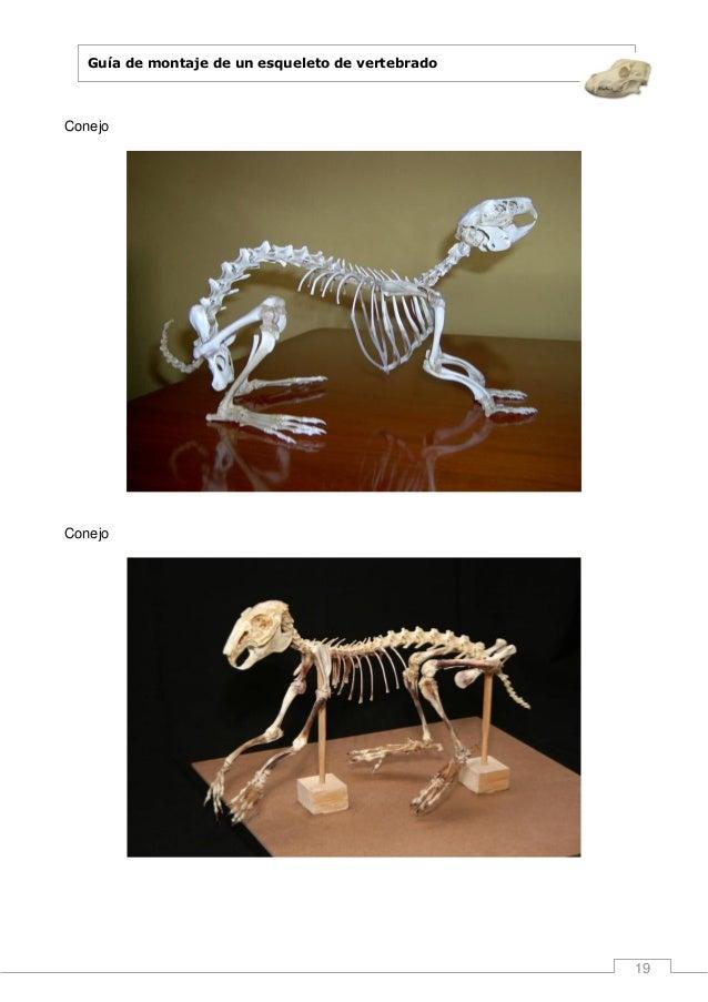 Guia de montaje de un esqueleto de vertebrado