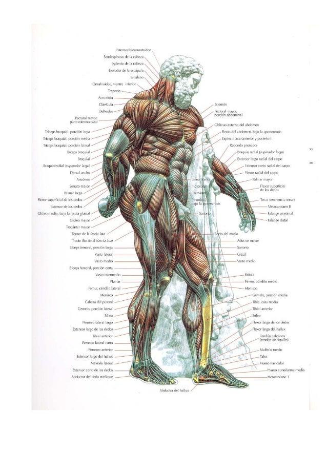Guia movimientos musculacion Slide 3