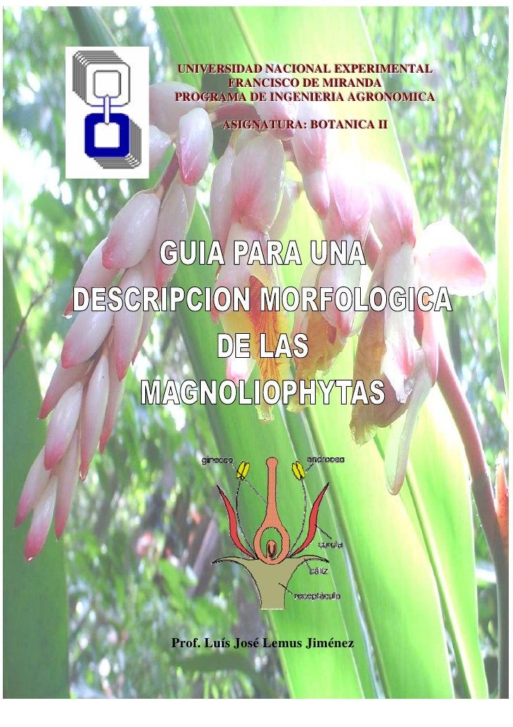 UNIVERSIDAD NACIONAL EXPERIMENTAL UNIVERSIDAD NACIONAL EXPERIMENTAL       FRANCISCO DE MIRANDA       FRANCISCO DE MIRANDAP...