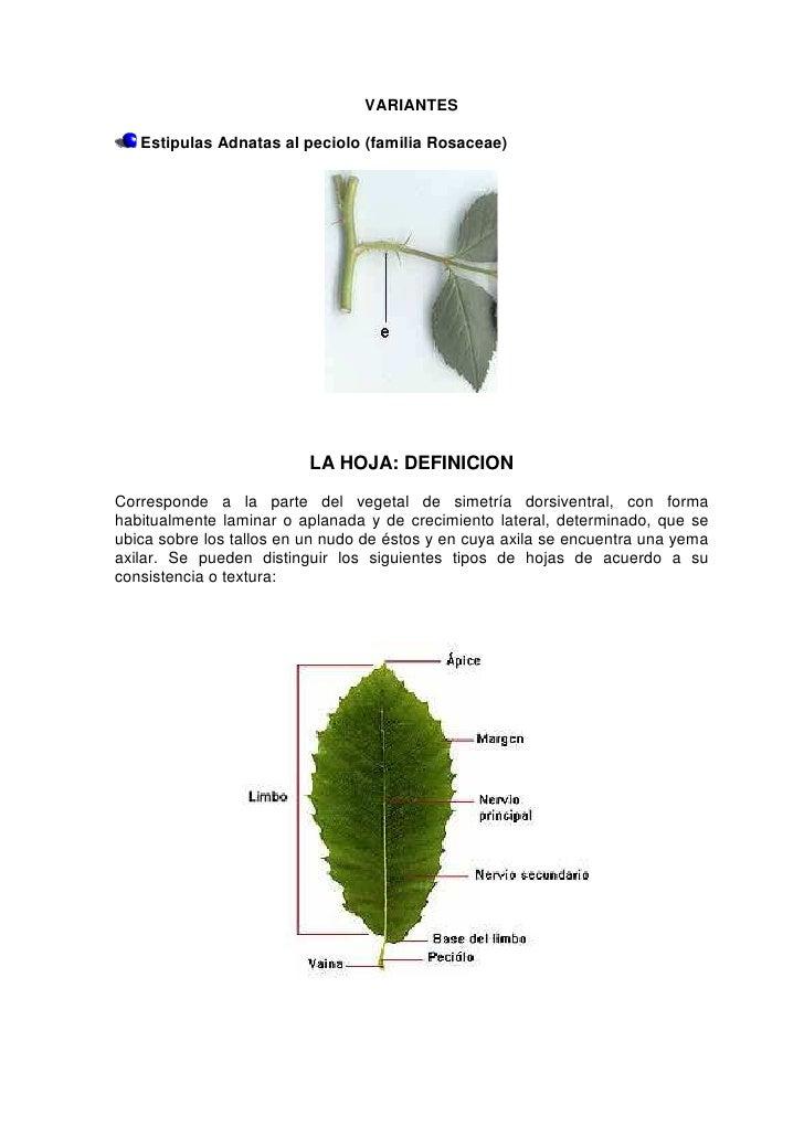 Guia para descripcion morfologica