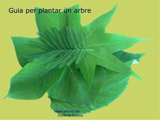 www.arbres.cat Gemma Esteba Guia per plantar un arbre