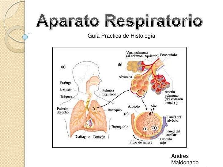 Guía Practica de Histología                              Andres                              Maldonado