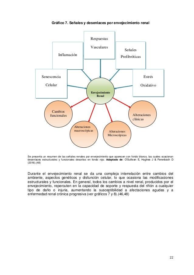 22 Gráfico 7. Señales y desenlaces por envejecimiento renal Se presenta un resumen de las señales renales por envejecimien...
