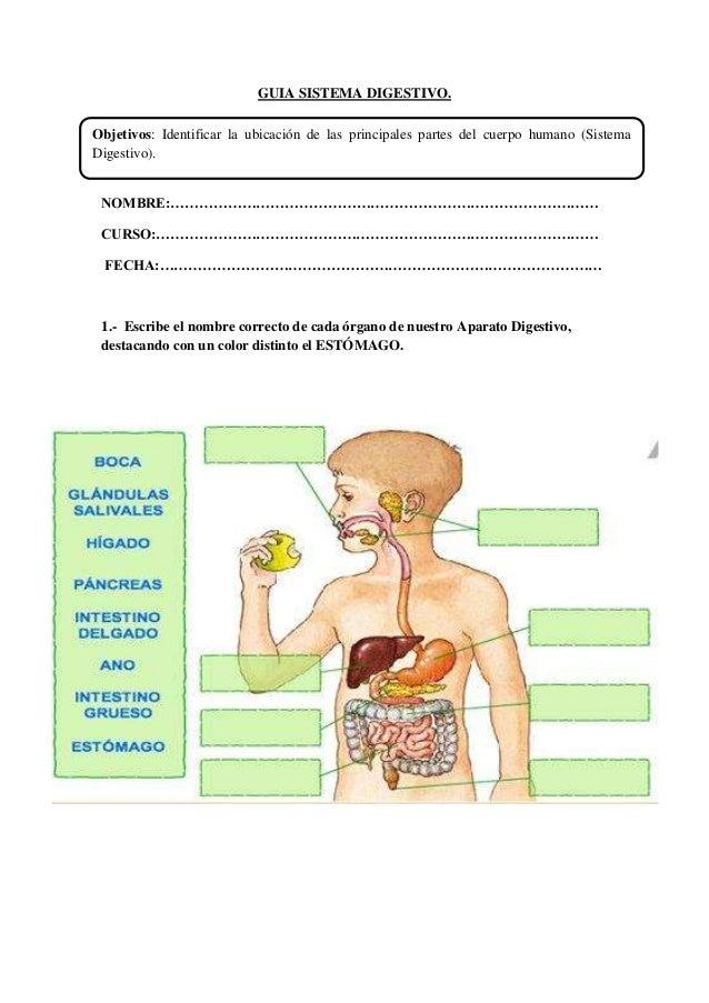Guia aparato digestivo pla.3