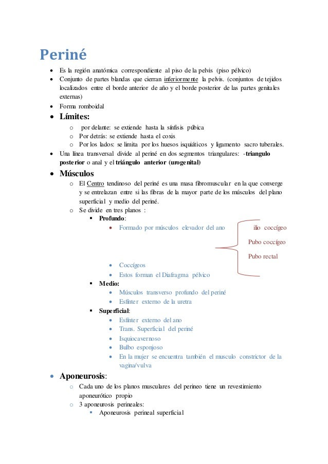 ANATOMIA- PERINE