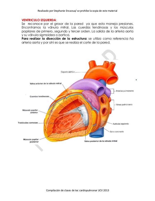 Guia tecnicas cardiopulmonar pdf