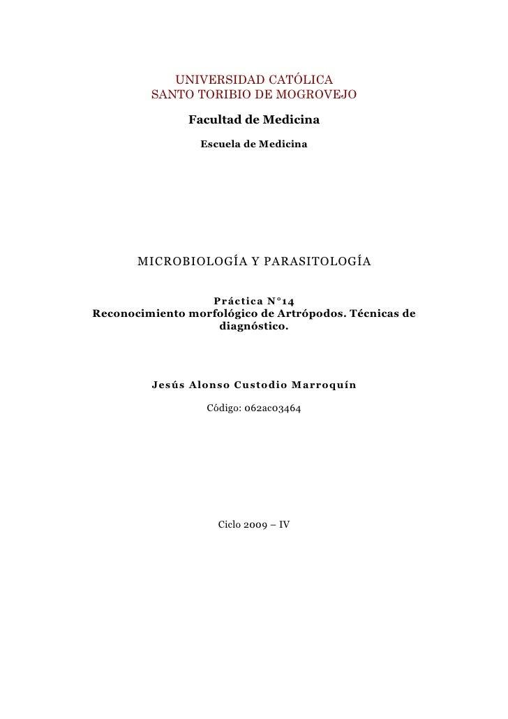 Guia XIV: Reconocimiento morfológico de Artrópodos
