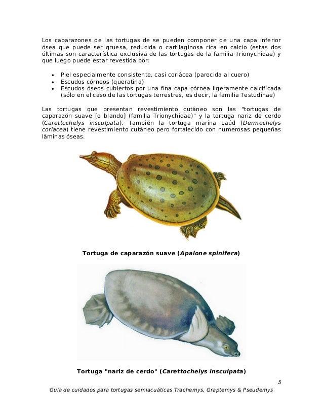 Guia y cuidados tortugas