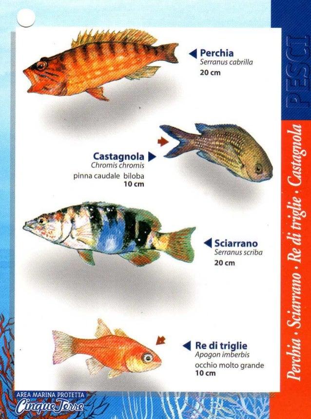 Guida pesci Seawatching Cinque Terre