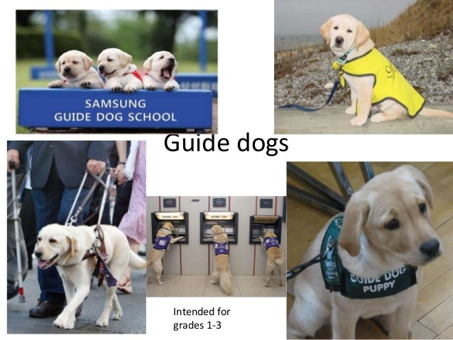 Guide dogs Intended for grades 1-3