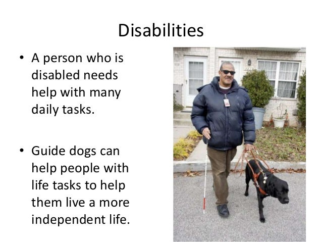 How Are Dogs Trained To Help Blind People Essay  Research Paper  How Are Dogs Trained To Help Blind People Essay