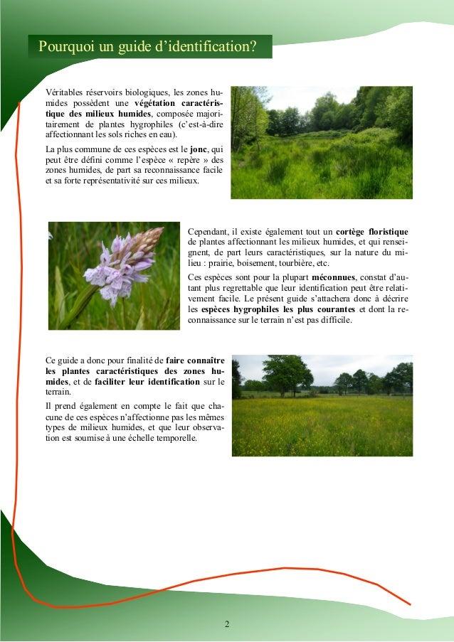 Guide d'identification des plantes des zones humides Slide 2