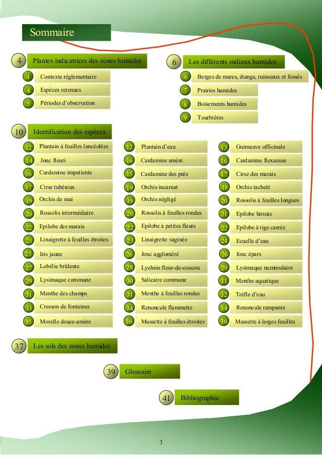 Guide d'identification des plantes des zones humides Slide 3