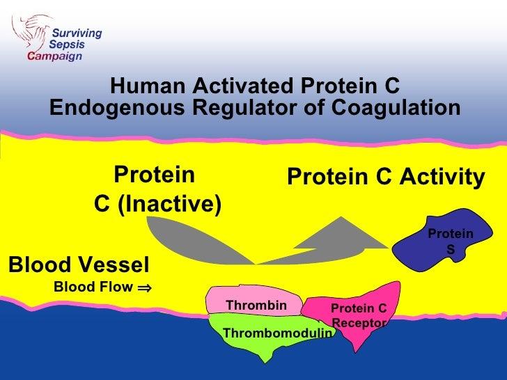 Human Activated Protein C Endogenous Regulator of Coagulation Thrombin Thrombomodulin Protein  C (Inactive) Protein C Acti...