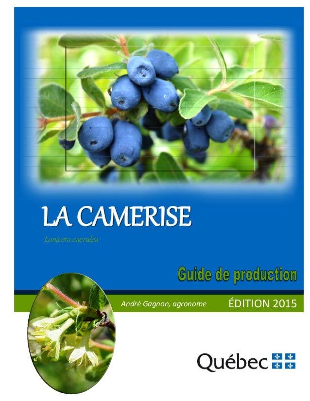 ÉDITION2015 Lonicera caer lea AndréGagnon,agronome