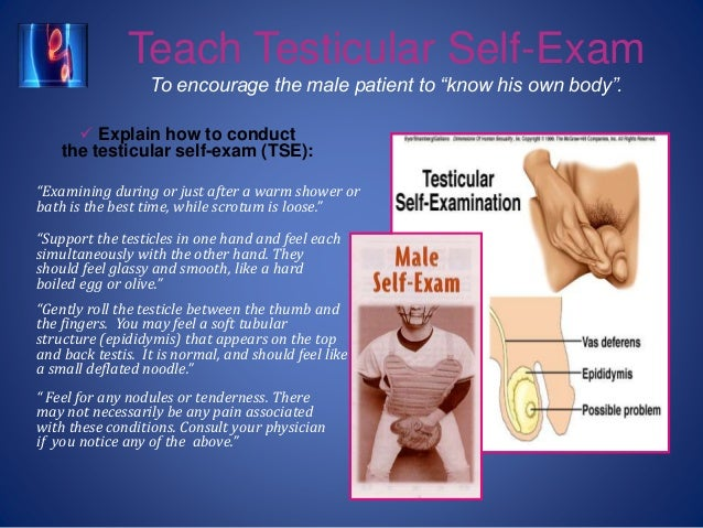 """Teach Testicular Self-Exam To encourage the male patient to """"know his own body"""".  Explain how to conduct the testicular s..."""