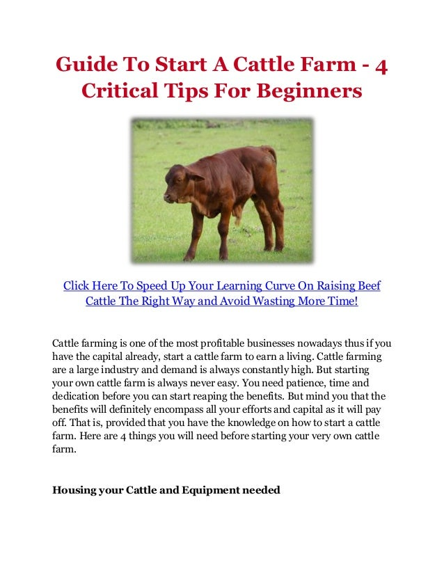 Guide To Start A Cattle Farm - 4  Critical Tips For Beginners  Click Here To Speed Up Your Learning Curve On Raising Beef ...