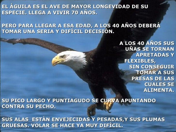EL ÁGUILA ES EL AVE DE MAYOR LONGEVIDAD DE SU ESPECIE. LLEGA A VIVIR 70 AÑOS. SUS ALAS  ESTÁN ENVEJECIDAS Y PESADAS,Y SUS ...