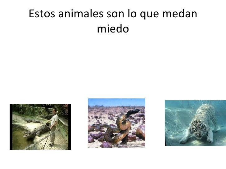 Estos animales son lo que medan miedo