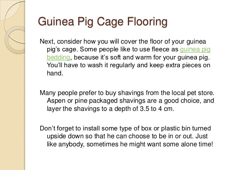 guinea pig care sheet slideshow