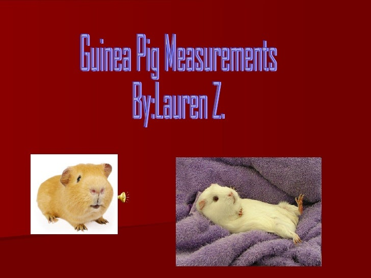 Guinea Pig Measurements  By:Lauren Z.