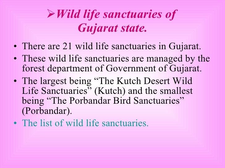 <ul><li>Wild life sanctuaries of  Gujarat state. </li></ul><ul><li>There are 21 wild life sanctuaries in Gujarat. </li></u...