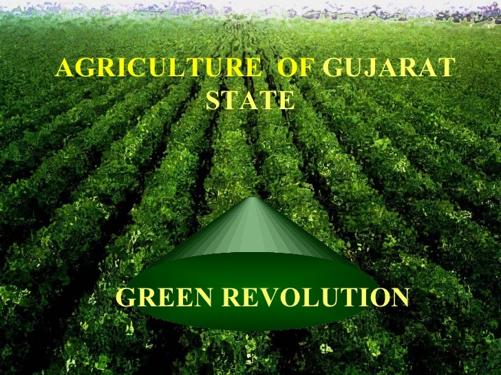 AGRICULTURE  OF  GUJARAT STATE   GREEN REVOLUTION