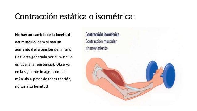 Gupos musculares tipos de fibra