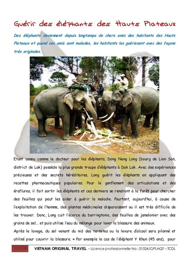 1 VIETNAM ORIGINAL TRAVEL – Licence professionnelle No : 01024/GPLHQT – TCDL Guérir des éléphants des Hauts Plateaux Des é...