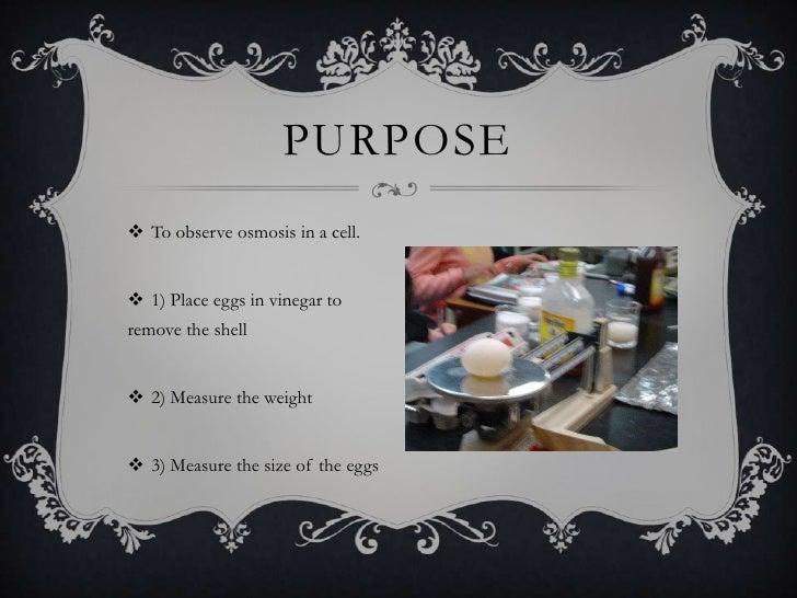 Gurpreet egg osmosis experiment