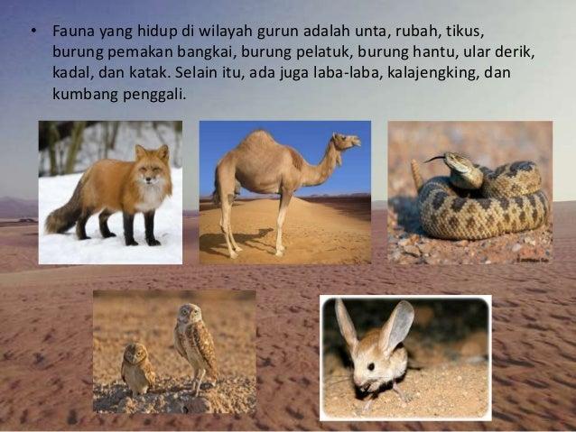 42 Koleksi Gambar Hewan Yang Hidup Di Gurun HD