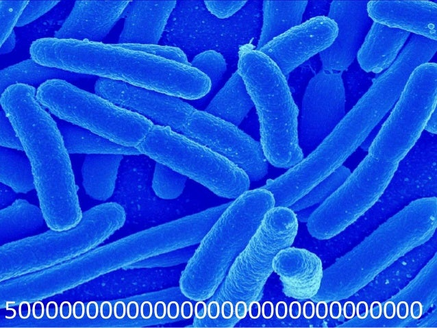 Gut microbiota Slide 3