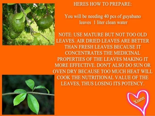 how to make tea from guyabano leaves