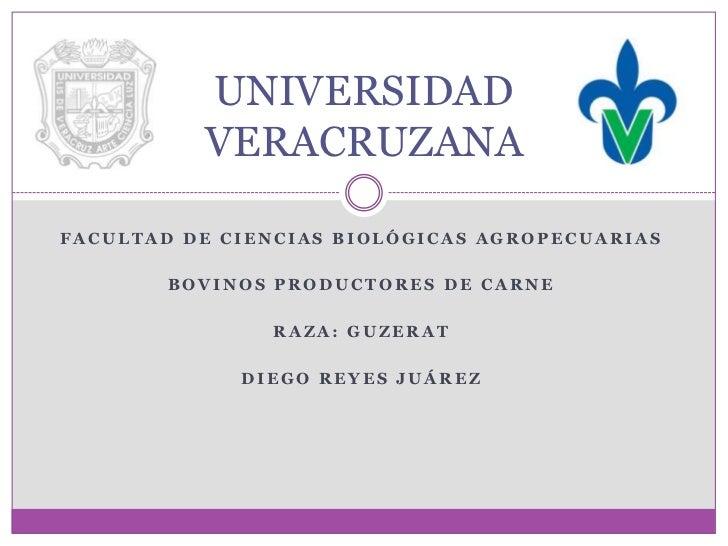 UNIVERSIDAD          VERACRUZANAFACULTAD DE CIENCIAS BIOLÓGICAS AGROPECUARIAS        BOVINOS PRODUCTORES DE CARNE         ...
