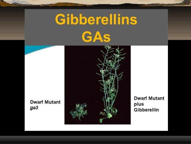 Gibberellins GAs