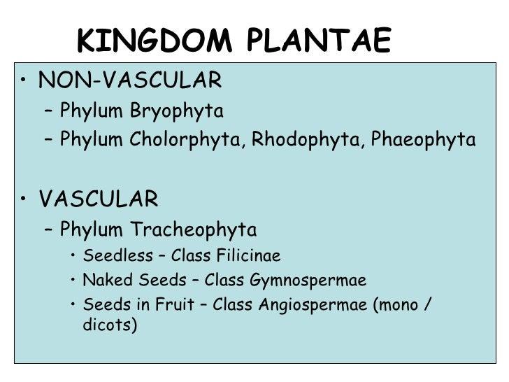 KINGDOM PLANTAE <ul><li>NON-VASCULAR </li></ul><ul><ul><li>Phylum Bryophyta </li></ul></ul><ul><ul><li>Phylum Cholorphyta,...