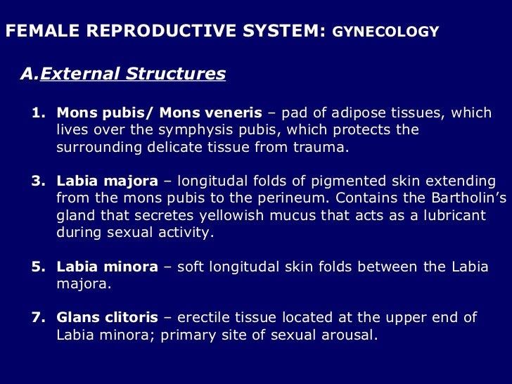Gynecological Anatomy Physiology