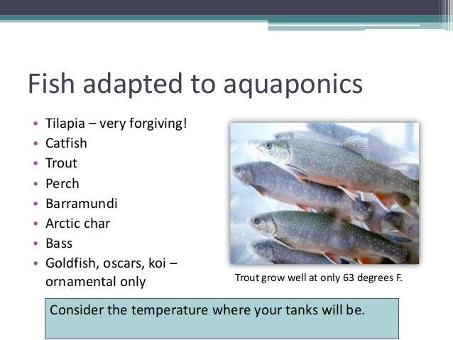 Grow your own nevada summer 2012 aquaponics for Catfish aquaponics