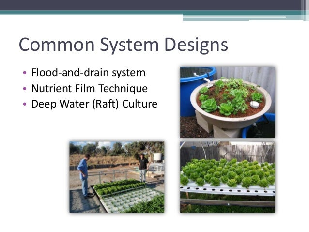 Grow Your Own Nevada Summer 2012 Aquaponics