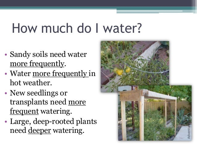 Grow your own nevada spring 2013 efficient irrigation - How often to water vegetable garden ...