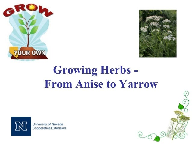 Growing Herbs -From Anise to Yarrow