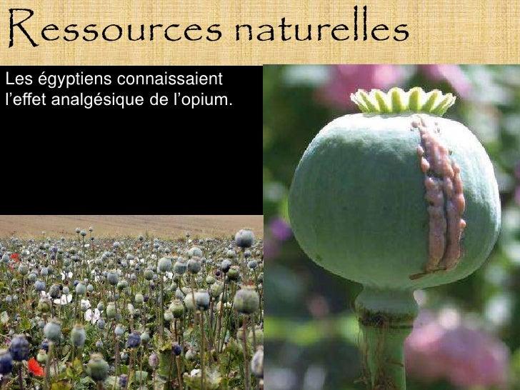 Ressources naturelles Les égyptiens connaissaient l'effet analgésique de l'opium.