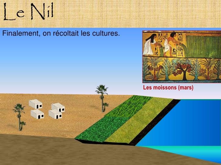Le Nil Finalement, on récoltait les cultures.                                              Les moissons (mars)