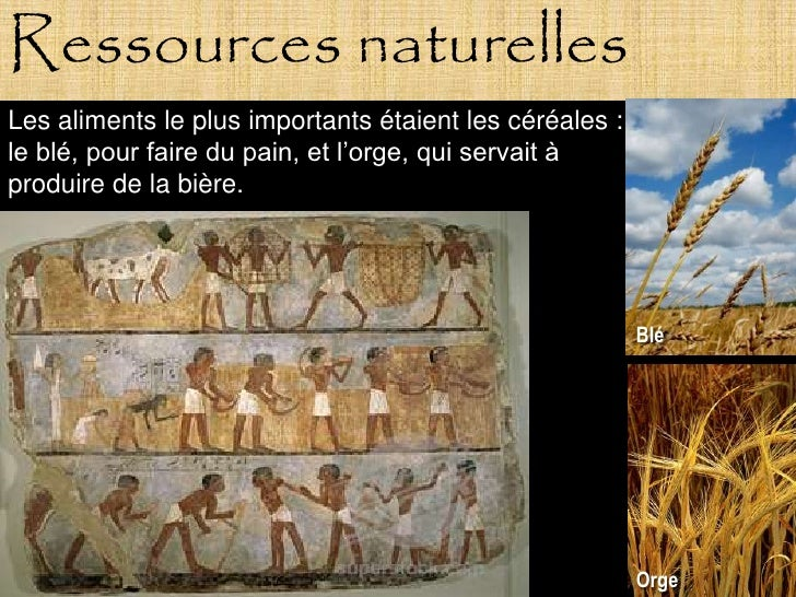 Ressources naturelles Les aliments le plus importants étaient les céréales : le blé, pour faire du pain, et l'orge, qui se...